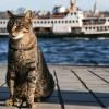 İstanbul sokakları kedilere emanet